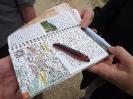 9cm Raupe des Weidenbohrers